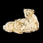 SCS Amur Leopard Cubs