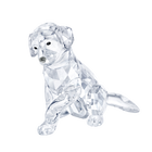 Labrador Mother